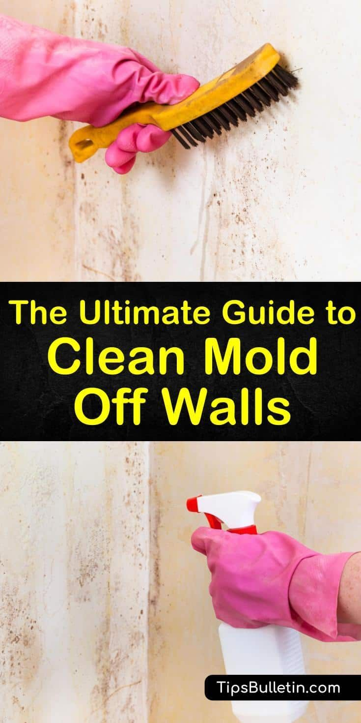 How To Clean Mold Off Walls In 2020 Get Rid Of Mold Mold Remover Remove Mold From Walls