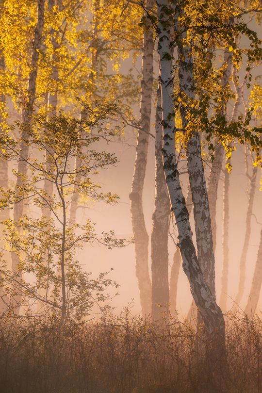 ✿Spirit Of The Forest : Photo