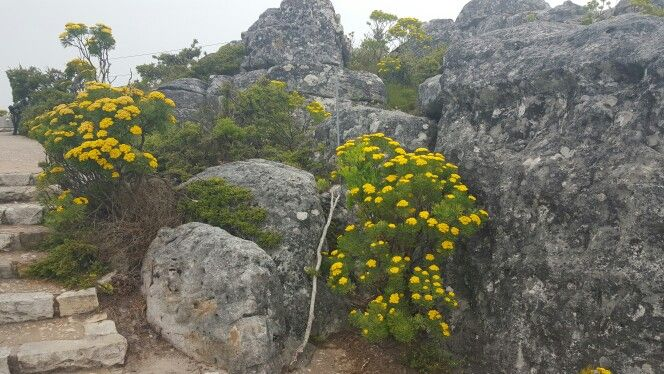 Up top Table Mountain