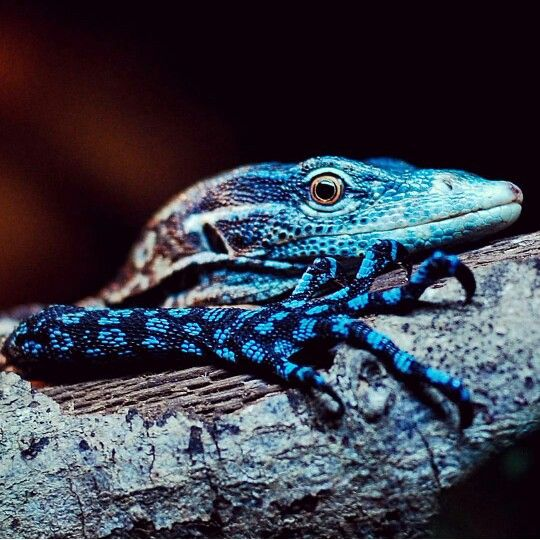 17+ best images about Amazing Reptiles on Pinterest ... - photo#5