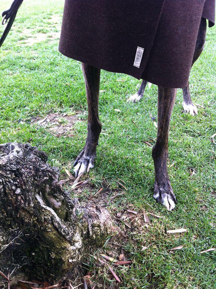 Abrigo para galgo en Burel (100% lana, impermeable), by O Clube da Tula… http://oclubedatula.com/es/un-outfit-otonal-by-o-clube-da-tula-brott-barcelona/
