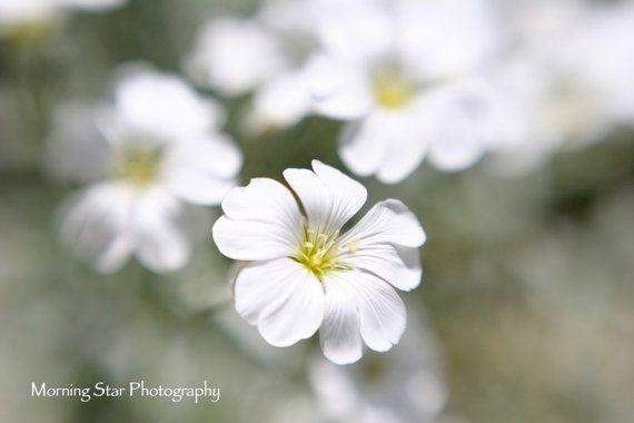 Spring Line Vol.94 by Ayca Hoser on Etsy