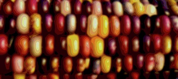 Indian Corn I.   Posterized finish.  Macro.  Flint corn or Indian corn is one of the oldest varieties of corn, from the Native American who taught the process to the early colonists.  A symbol of the harvest season, flint corn - hard shells - can be found as centerpieces and decor at Halloween and Thanksgiving.  Click on the image or link to purchase a poster, print, acrylic print or canvas print.  In addition, there are home decor and gift items.   All with a 30-day money back guarantee.