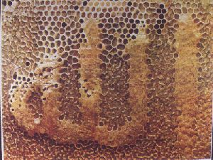 Beehive spelling Allah: Islamic Miracles in Nature