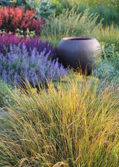 Best 25 carex testacea ideas on pinterest carex stipa for Low mounding ornamental grasses