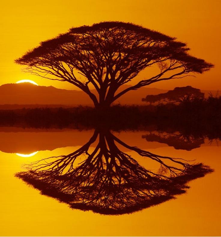 sunset, tree - by Rick Sammon