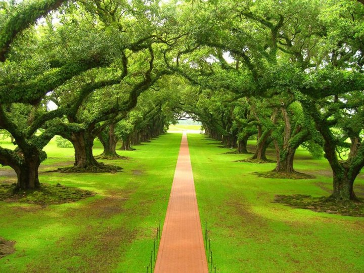 the Oak Alley Plantation in Louisiana