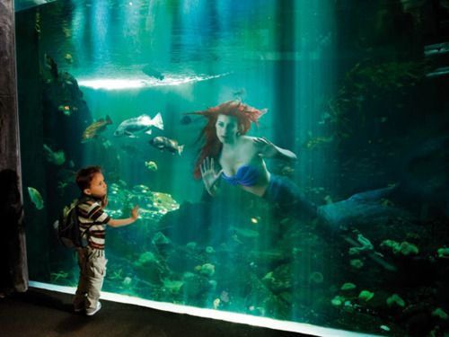 Grandmother's hometown in FL they do a live underwater mermaid show in the spring. I've seen it so many times and it's still absolutely breathtaking! I def want my legacies to see it.
