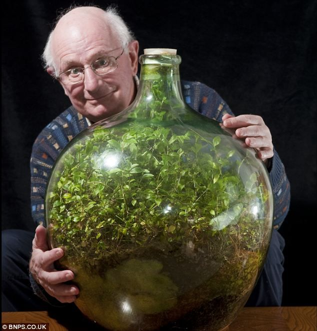 Thriving since 1960, garden in a bottle: Seedling sealed in its own ecosystem and watered just once in 53 years. Awesome!!