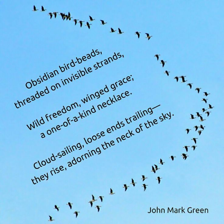 Adornment - a nature poem - homage to Rumi's poetry by John Mark Green #birds #sky #necklace #nature #Rumi #johnmarkgreenpoetry #johnmarkgreen