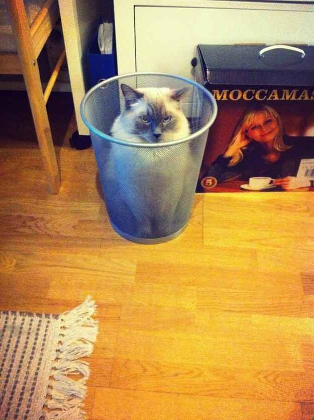 The cat who is a bin now. | The 22 Most ¯_(ツ)_/¯ Cats Of All Time