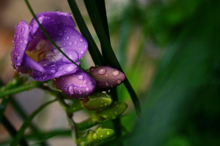 Flowers. Rain drops.