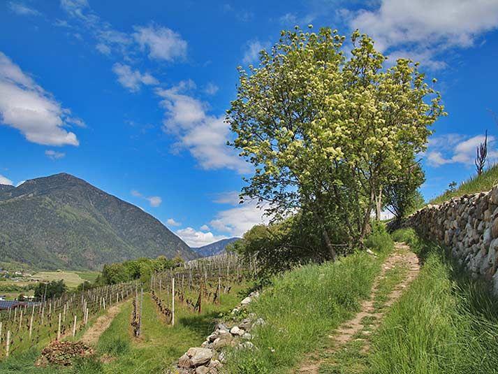 Wanderung von Brixen zum Kloster Neustift (leicht)