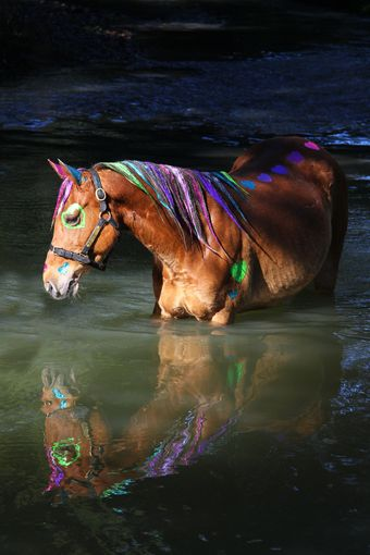 Sabella :: Sabella Glitter Spray chestnut horse in water