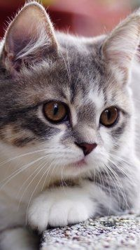 Animal, Cat, Cats Mobile Wallpaper Animal, Cat, Cats Mobile Wallpaper      Animal, Cat, Cats Mobile Wallpaper    <a href=