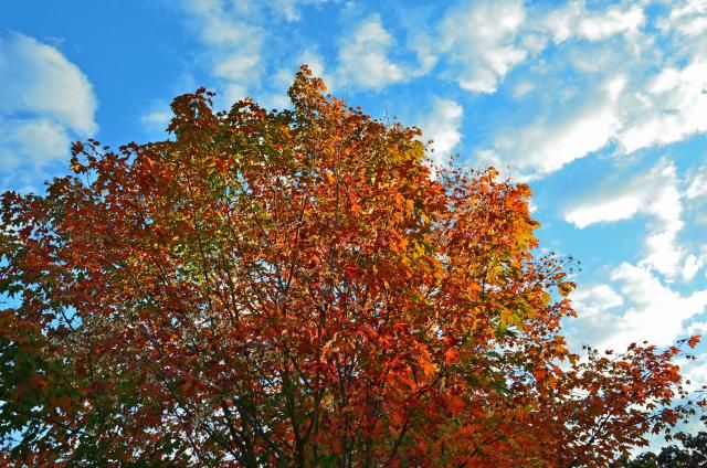 New England fall foliage maps to help you plan your trip based on historical data and current reports of peak fall foliage.