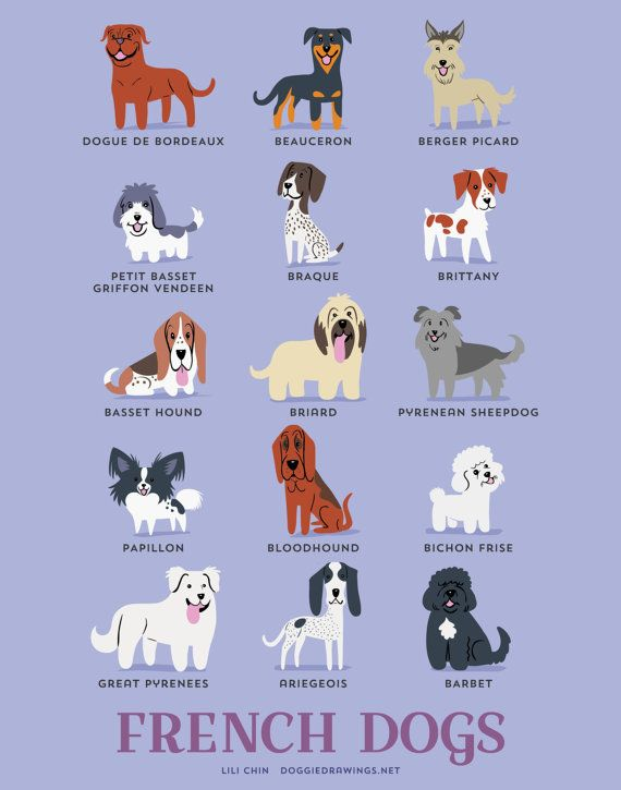 French Dogs - Doggie Drawings