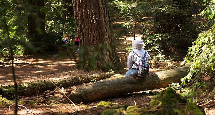 """""""Tall and mossy green; Up into the sky they reach; I love redwood trees"""" ~ Sophia In celebration of #NationalPoetryMonth, read redwoods-inspired haikus written by students in our Redwoods and Climate Change High School Program. https://www.savetheredwoods.org/blog/national-poetry-month-inspires-student-haikus/ @Skyline High School (Oakland, California) #RedwoodsInspiration"""