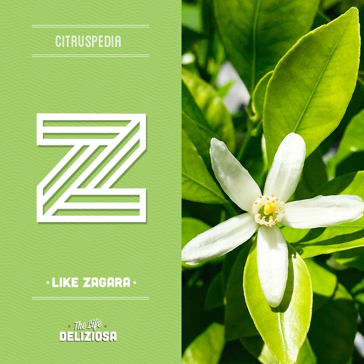 Do you know where the word 'zest' comes from? Find out on our #Citruspedia at  sanpellegrinofruitbeverages.com