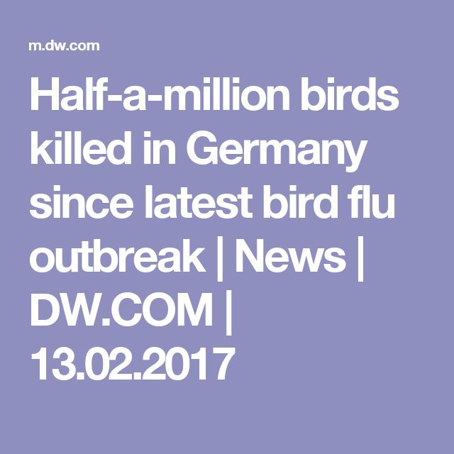 Half-a-million birds killed in Germany since latest bird flu outbreak | News | DW.COM | 13.02.2017