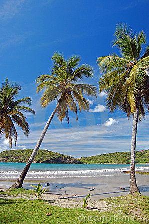Tall palm trees on La Sagesse beach on Grenada Island - Saint Vincent and the Grenadines