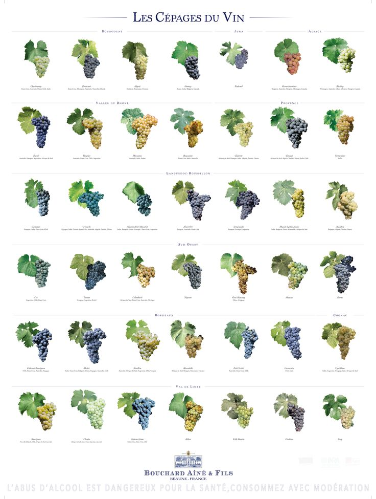 The Grape Varieties of Wine Our wine posters > Bouchard Aîné & Fils #wine #education