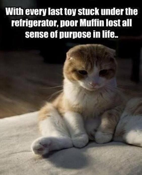 645 best life with cats images on pinterest cats crazy cat lady first world cat problem sciox Image collections