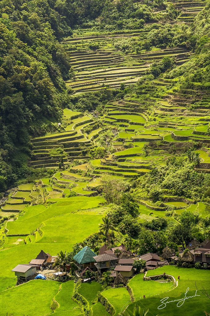 Banaue Rice Terraces, Philippines by brusca