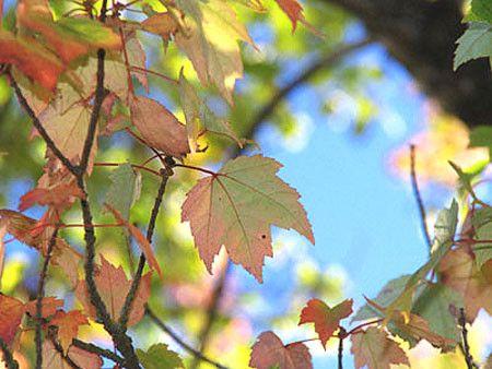 сочи осенью - Поиск в Google