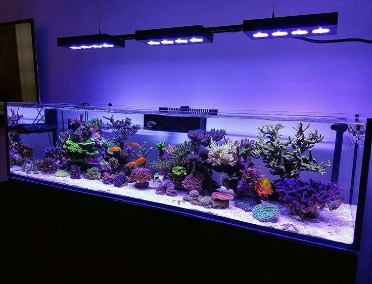 Awesome marine aquarium setup!