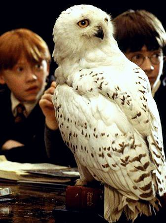 Ron Weasley (Rupert Grint), Hedwig, Harry Potter (Daniel Radcliffe) - Harry…