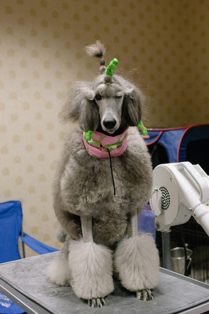 Die Hunde-Show aus dem Paralleluniversum   VICE   Deutschland