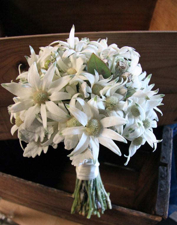 An australian natives wedding bouquet, featuring flannel flowers