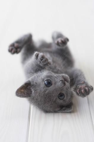 i don't like cats, but kittens are different, they are so darn cute. Well anything baby is adorable
