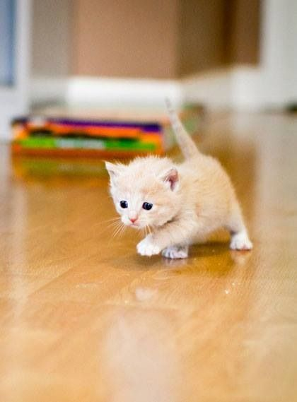 Reminds me of my kitten when she was just a baby!