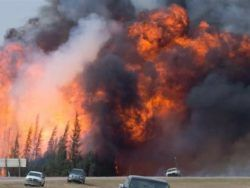 Fort McMurray Wildfire | Wood Buffalo Small Animal Hospital