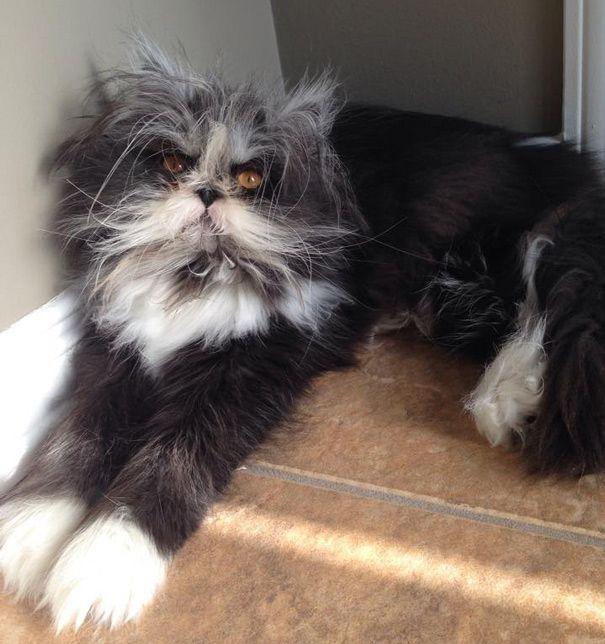 Aby przyjrzeć się Atchoum, 9 miesięcznej kotce z nadmierną ilością futra, musisz spojrzeć w jej demoniczne oczy, które porażają i unieruchamiają każdego śmiałka. A tak na poważnie, Atchoum to zwykły kociak, który po prostu został obdarowany ogromną ilością futra i który, jak mówi jego właścicielka jest słodkim i miłym kociakiem.