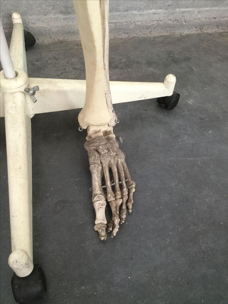 Mejores 13 imágenes de Skelet en Pinterest | Referencia de anatomía ...