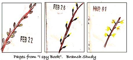 do a forsythia study in March or April- stick to flowering plant- very cool