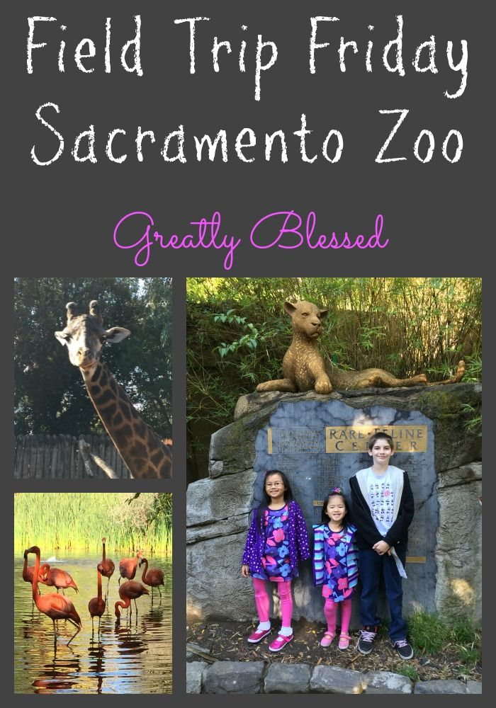 Greatly Blessed: Field Trip Friday: Sacramento Zoo