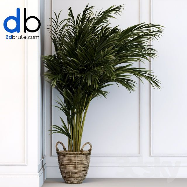 503 Plant 3dmodel 3dsmax With Images Plants 3d Model Office