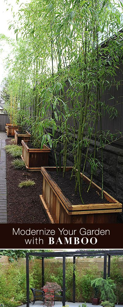 Modernize Your Garden With Bamboo