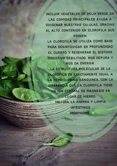 Las enzimas, proteínas, vitaminas, minerales y la clorofila son algunos de los beneficios nutricionales que recibe nuestro organismo cuando incluimos hojas verdes  en nuestra dieta ..Y en la de nuestros  hijos . La clorofila tiene el poder de oxigenar nuestras células, aportar energía y depurarnos.                       MonyHome