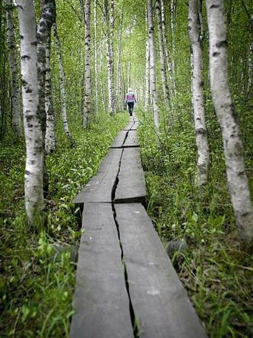 hiking in a birch forest