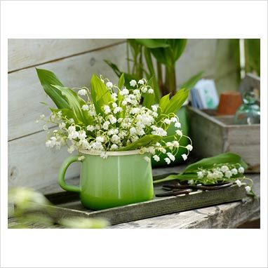 lily of the valley in vases images | ... Lily of the Valley in vase - GAP Photos - Specialising in