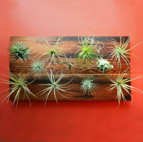 A little tool that you shove into a wall and squish an air plant into for instant vertical gardens.