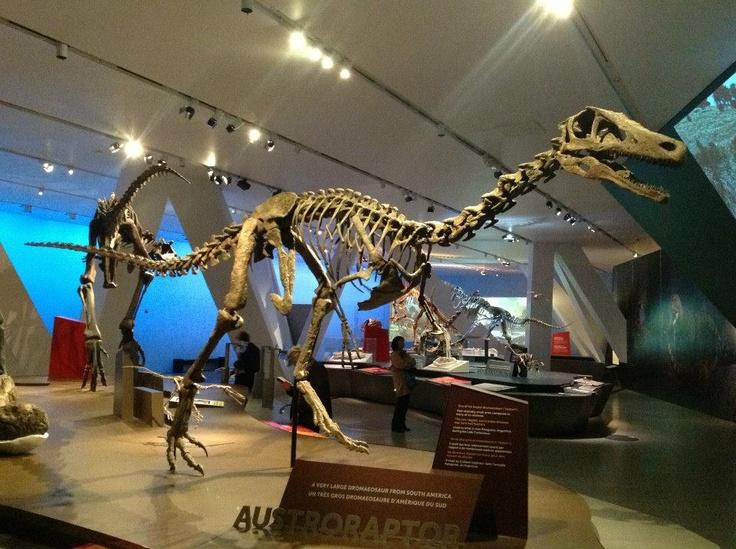 Austroraptor — Royal Ontario Museum