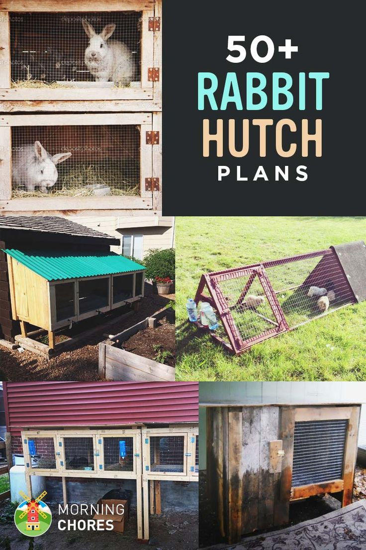 50 DIY Rabbit Hutch Plans                                                                                                                                                     More