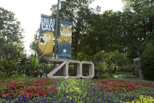 At the Washington National Zoo, see more than 400 different species of animals, the National Zoo, Washington DC's 163-acre zoological park, find hours, visiting tips and pictures of the National Zoo