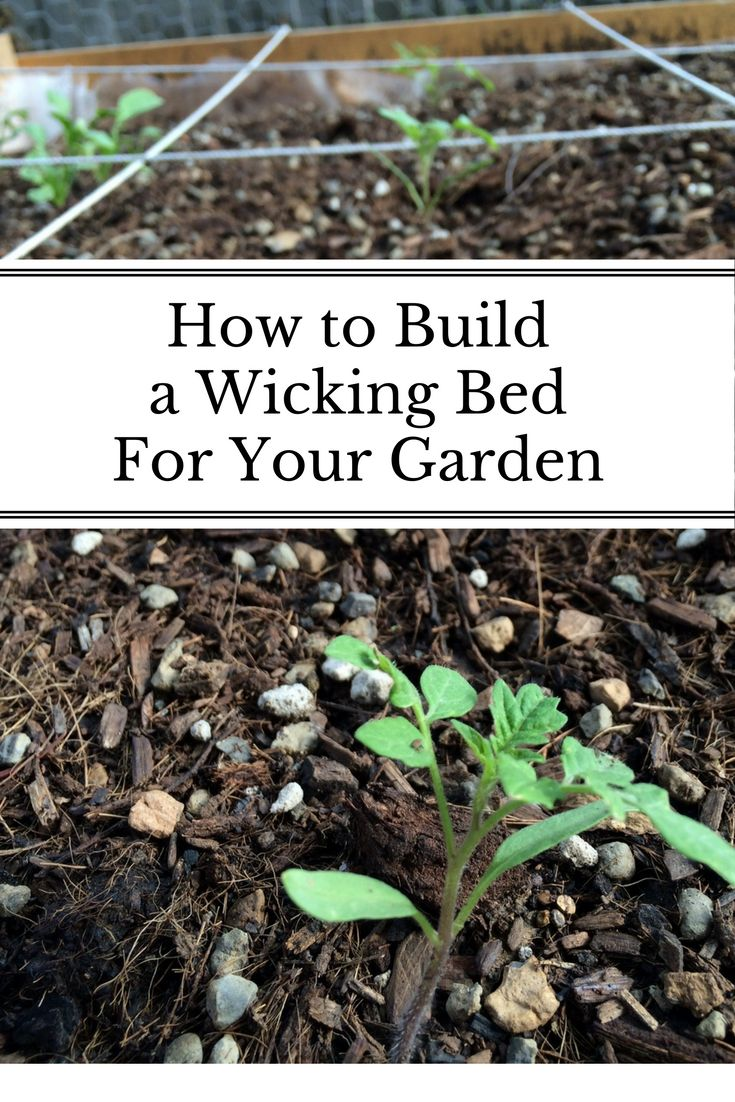 A Step By Step Tutorial On How To Build Your Own Wicking Bed.